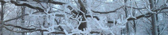 cropped-trc3a4d-vinter.jpg